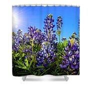 Texas Bluebonnets Backlit II Shower Curtain