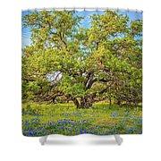 Texas Bluebonnets Under A Giant Oak Tree Shower Curtain