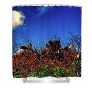 Texas Cactus Shower Curtain