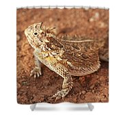 Texas Horned Lizard Shower Curtain