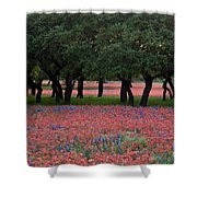 Texas Live Oaks Surrounded By A Field Of Indian Paintbrush And Bluebonnets Shower Curtain