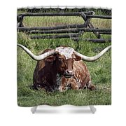 Texas Longhorn Bull At Rest Shower Curtain