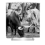 Texas Longhorn Steer In Black And White Shower Curtain