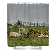 Texas Longhorns And Wildflowers Shower Curtain