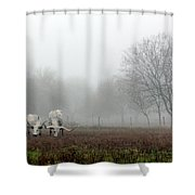 Texas Longhorns  Grazing On A Foggy Morning Shower Curtain