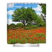 Texas Poppy Field 159 Shower Curtain