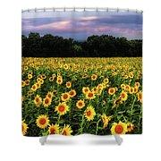 Texas Sunflowers Shower Curtain by Robert Bellomy