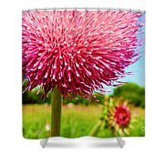 Texas Thistle 003 Shower Curtain