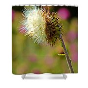 Texas Thistle 005 Shower Curtain