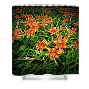 Texture Drama Field Of Tiger Lilies Shower Curtain