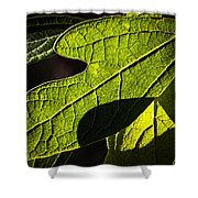 Textured Glow Shower Curtain by Christopher Holmes