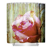 Textured Pink Red Rose Shower Curtain
