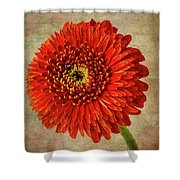 Textured Red Daisy Shower Curtain