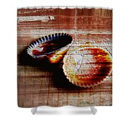 Textured Shells Shower Curtain