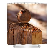 Thanks For The Grub Shower Curtain