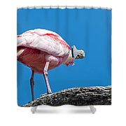 That Disapproving Look Shower Curtain