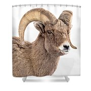 That Handsome Ram Shower Curtain
