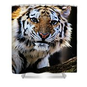 That Tiger Look Shower Curtain