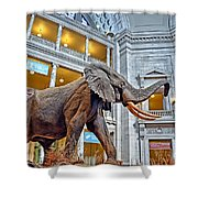The African Bush Elephant In The Rotunda Of The National Museum Of Natural History Shower Curtain