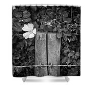 The Allotment Project - Dog Rose Shower Curtain