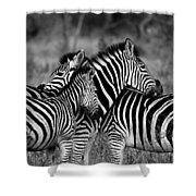 The Amazing Shot Of Zebra Shower Curtain