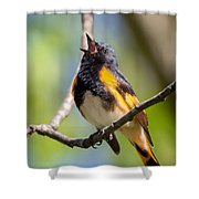 The American Redstart Shower Curtain
