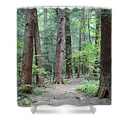 The Ancient Hemlock Forest Shower Curtain