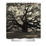 The Angel Oak Shower Curtain