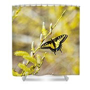the Anise Swallowtail  feeding in the trees Shower Curtain