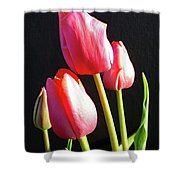 The Appearance Of Spring - Tulips Shower Curtain