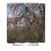 The Apple Tree Shower Curtain by Danielle Allard