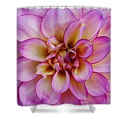 The Art In Flowers 1 Shower Curtain