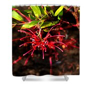 The Art Of Spider Flower Shower Curtain