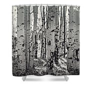 The Aspen Forest In Black And White  Shower Curtain