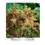 The Astible After The Bloom Shower Curtain
