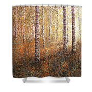 The Autumn Sun In The Birch Forest Shower Curtain
