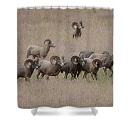 The Bachelors 2 Shower Curtain