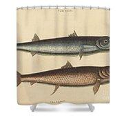 The Barracuda (esox Barracuda) Shower Curtain