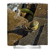 The Bath - American Goldfinch - Spinus Tristis Shower Curtain
