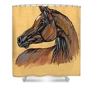The Bay Arabian Horse 10 Shower Curtain