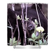The Bearcub And The Dandelion Shower Curtain