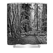The Beautiful And Massive Giant Redwoods Shower Curtain