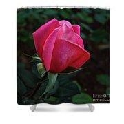 The Beautiful Rose Bud Shower Curtain