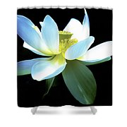 The Beauty Of A Lotus Shower Curtain