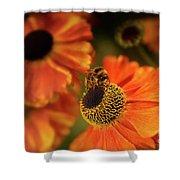 The Bee And The Helenium Shower Curtain