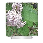 The Bee Landing Shower Curtain