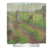 The Beet Harvest Shower Curtain