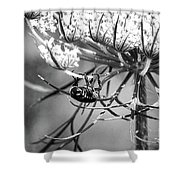 The Beetle Acrobat Black And White Shower Curtain