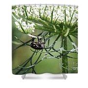 The Beetle Acrobat Shower Curtain