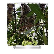 The Beginnings Of A Bushtit Nest Shower Curtain